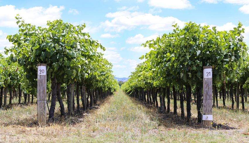 mudgee vineyard tours